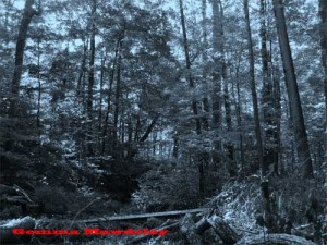 woods 300x225 Ghost Story (The Wailing Wood)