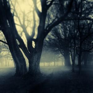 misty trees 300x300 Witch's Hallow Part 1