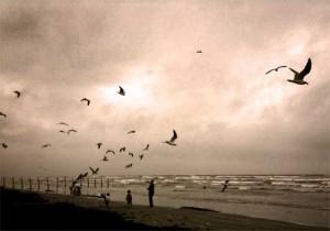beach with gulls 300x210 Escape