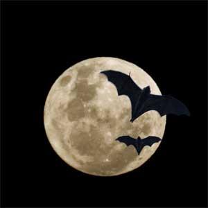 bats Friendship  The Bats