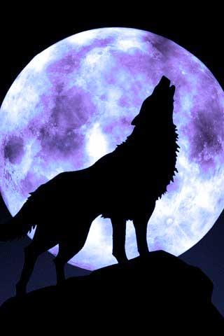 wolf and moon Human Friendship Feelings  Faithful Moons