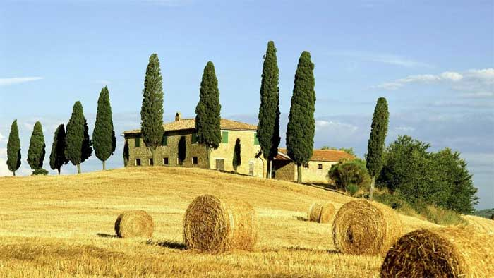 cypress-trees-tuscany