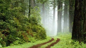 People of the Forest, People of the Forest