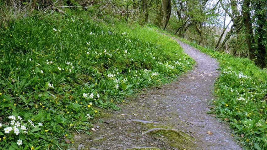Primrose Path, Have You Ever Walked on Primrose Path?