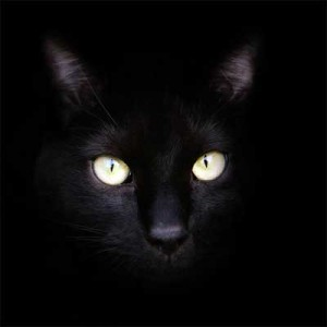 The Black Cat Conjecture