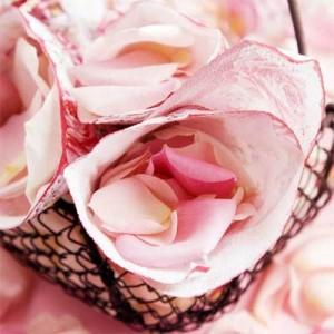 roses, Inside Roses