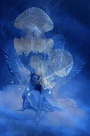 Jellyfish, When Jellyfish Dream Of Angels