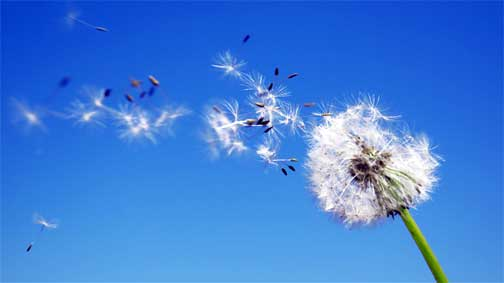 seeds-in-the-wind