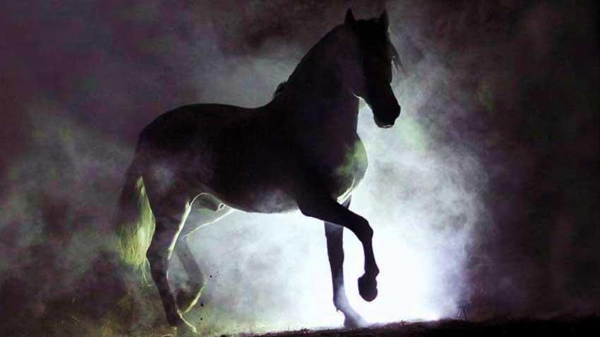 Walter Farley - Black Stallion