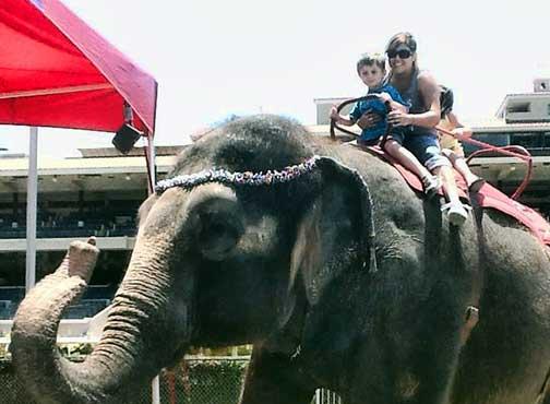 Elephants, Finding the Elephants