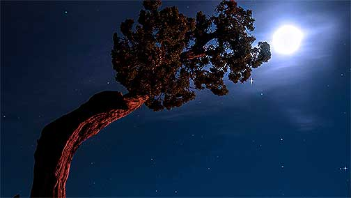 moon-and-pine-tree