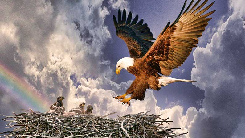 eagle nest cougar women Welcome to the 2018 season of the hanover bald eagle nest we are looking forward to sharing this season with you - enjoy 24-7 access to live video and audio captured from 75 feet above the ground.