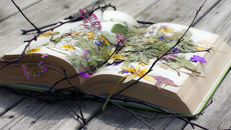 ... Flowers Pressed in a Book