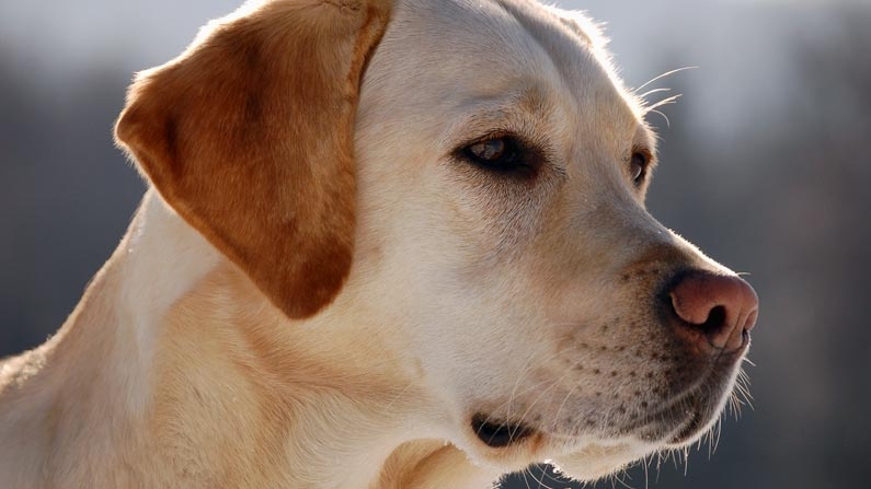 soul-of-dog