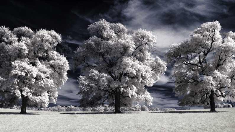 Winter - winterscape-with-trees