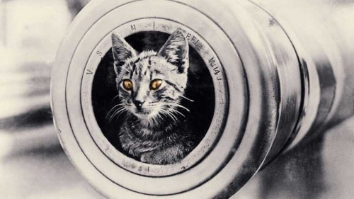 Cats and Warfare - cat-in-tube