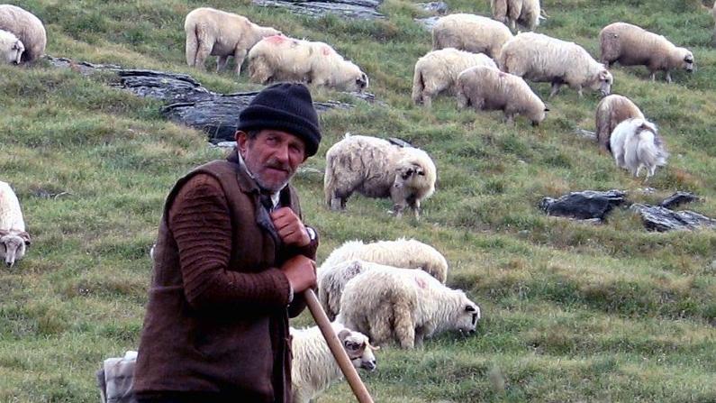 A Point of view - ol Stinky - Shepherd