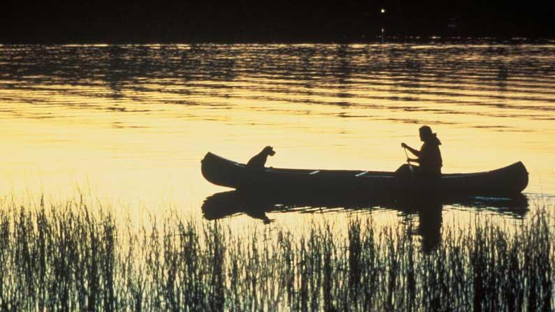 Paddle, Paddle