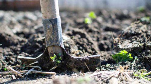 gardening, Gardening the Stress Away