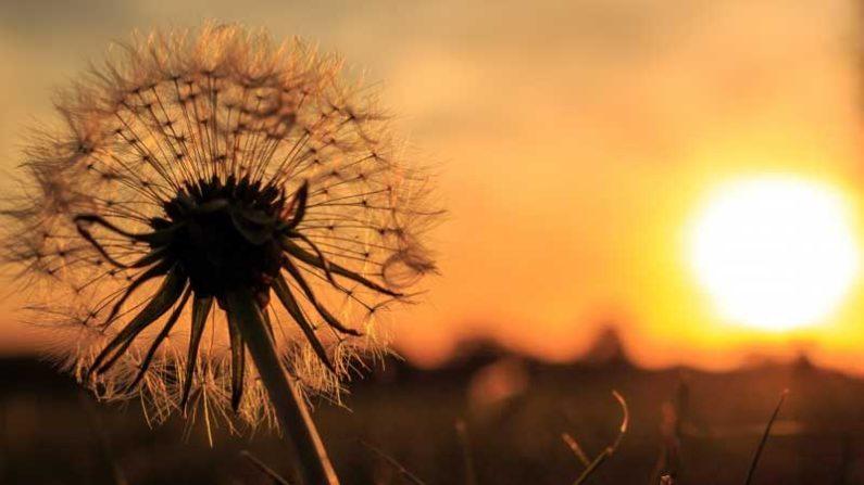 evening-blossom