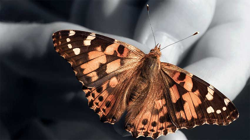 Butterfly Touchdown