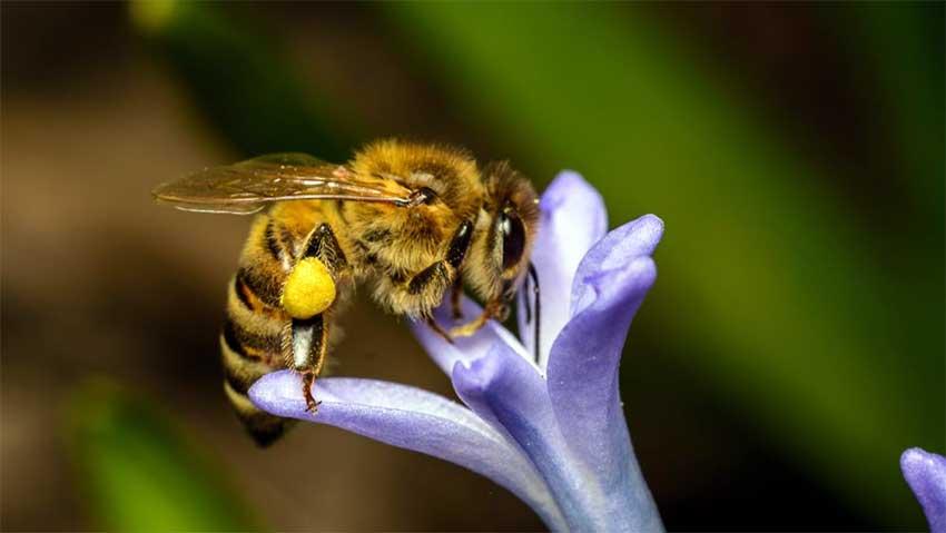 The Bee Sings